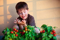 Cute little boy with homegrown cherry tomatoes Stock Image
