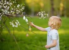 Cute little boy hunts for easter egg on branch of flowering tree royalty free stock image