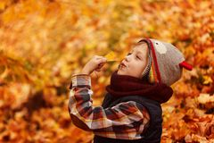 Cute little boy infunny hat and warm scarf at golden autumn in park. Royalty Free Stock Photo