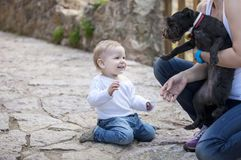Cute little boy looking at dog in mother's hands Stock Images
