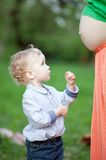 Cute little boy looking at pregnant moms belly Royalty Free Stock Images
