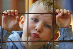 Little boy peeping 2. Cute little boy peeping in the garden royalty free stock images
