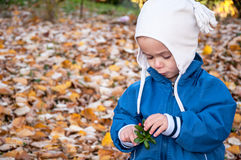 Cute little boy picking red berry. Portrait of cute boy picking red berry surrounded by autumn orange leafs Royalty Free Stock Images