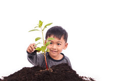 Cute little boy planting tree Stock Photo