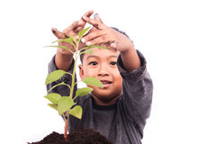 Cute little boy planting tree Stock Photography