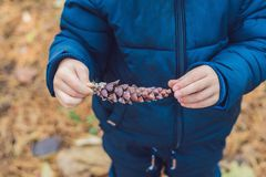 Cute little boy playing with big pine cone outdoors. Game for ki royalty free stock photo