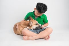 Cute little boy playing with dog at home royalty free stock photo