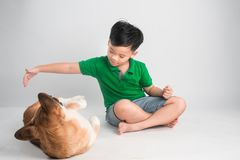 Cute little boy playing with dog at home royalty free stock photography