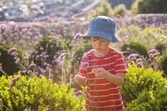 Cute little boy, playing with flower on a summer day Stock Images