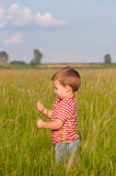 Cute little boy playing on the meadow Royalty Free Stock Photography