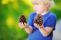 Cute little boy playing with two big pine cones outdoors Stock Images