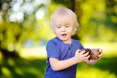Cute little boy playing with two big pine cones outdoors Stock Photos