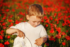 Cute little boy with poppy flower on poppy field on summer day Stock Photography