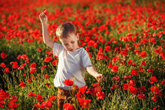 Cute little boy with poppy flower on poppy field on summer eveni Royalty Free Stock Photography