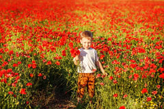 Cute little boy with poppy flower on poppy field on summer eveni Stock Images