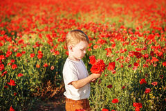 Cute little boy with poppy flower on poppy field on summer eveni Royalty Free Stock Images