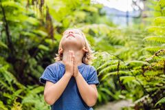 Cute little boy praying in the woods royalty free stock photography