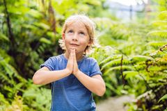 Cute little boy praying in the woods stock image
