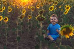 Cute little boy sitting on the ground in a field with sunflowers at sunset. The concept of a happy childhood. Outdoor recreation. stock photography