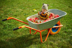 Cute little boy sitting in wheelbarrow Royalty Free Stock Photography