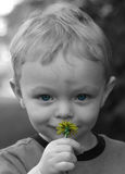 Cute little boy smelling flowe Royalty Free Stock Photography