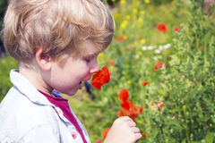 Cute little boy smells a red poppy Stock Photography