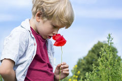 Cute little boy smells a red poppy Royalty Free Stock Photos