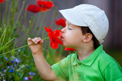 Cute little boy smells a wild flower Royalty Free Stock Photography