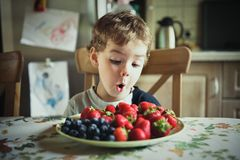 Cute little boy stares at a bowl of summer berries. Impression of a summer morning in a country house. Cute little boy stares at a bowl of summer berries. A Royalty Free Stock Images