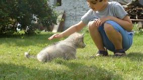 A cute little boy strokes a husky puppy on a grass stock video