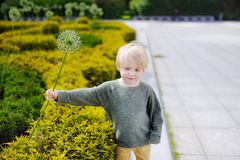 Cute little boy walking in the city park Royalty Free Stock Photos