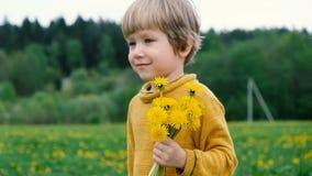 Cute little boy walking with dandelions, summer outdoors stock video footage