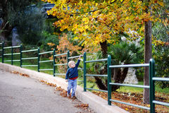 Cute little boy walking in park on nice autumn day Stock Image