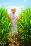 Cute little boy walking through the rice field Royalty Free Stock Photos