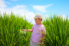 Cute little boy walking through the rice field Royalty Free Stock Photography
