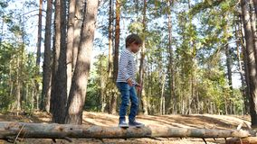Cute little boy walking on a thin log in the background of the forest. The child develops agility and courage. The stock footage