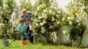 Cute little boy watering flowers in the summer garden. Watering flowers in garden. Portrait of grandfather and grandson. While working in flowers garden stock video footage