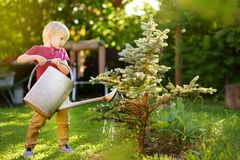 Cute little boy watering plants blue spruce in the garden at summer sunny day. Cute little boy watering blue spruce in the garden at summer sunny day. Mommy royalty free stock photos