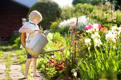 Cute little boy watering plants in the garden at summer sunny day. Mommy little helper royalty free stock image