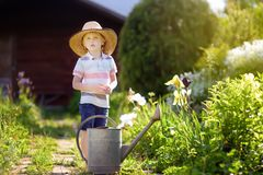Cute little boy watering plants in the garden at summer sunny day. Mommy little helper stock photos