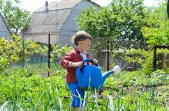 Cute little boy watering the vegetables Royalty Free Stock Photos