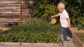 Cute Little Boy Waters Greenery From a Garden Watering Can. Little Gardener Concept stock video footage