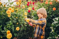 Cute little boy playing in flower garden Royalty Free Stock Photos