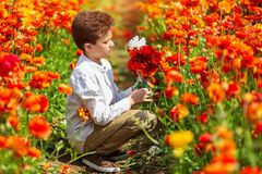 Cute little boy working in a spring garden, a child taking care of colorful chrysanthemum buttercups royalty free stock photography