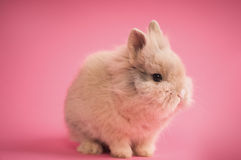 Cute little bunny Stock Image
