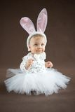 Cute little bunny Royalty Free Stock Image
