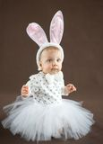 Cute little bunny. On brown background Stock Photos