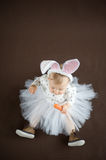 Cute little bunny. With carrot Stock Photo