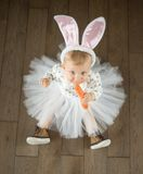 Cute little bunny looking up. Cute little bunny with carrot Royalty Free Stock Image