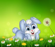Cute little bunny on grass background Royalty Free Stock Images